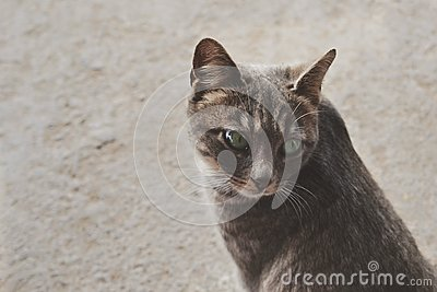 Cute Pet Cat Free Public Domain Cc0 Image