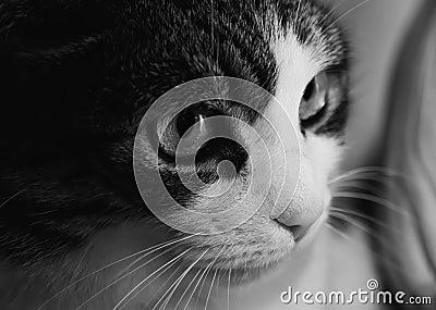 Cute pet cat