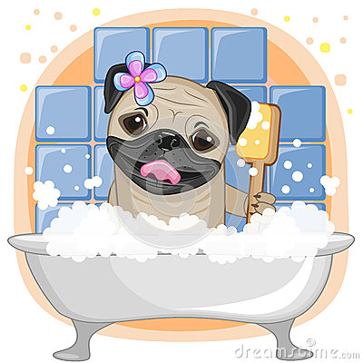 Free Cute Pug Dog Royalty Free Stock Photos - 47911518