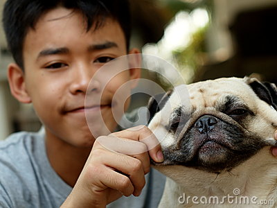 Cute pug dog playing outdoor
