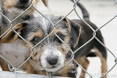 Cute pup in a cage