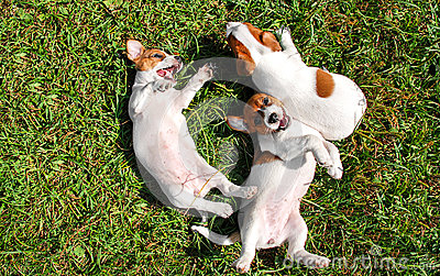 Cute puppies playing outdoors