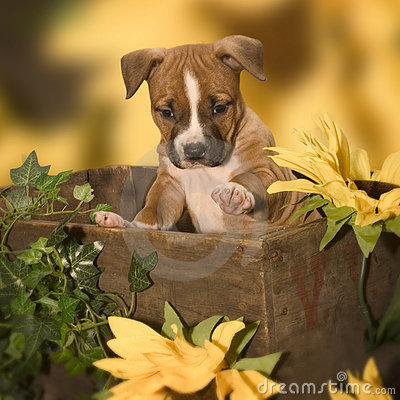 Free Cute Puppy Stock Images - 413684