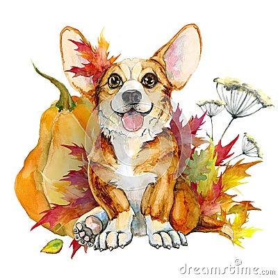 Free Cute Puppy Corgi Pembroke On A White Background Stock Photos - 123615353