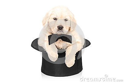Cute puppy dog with bow tie posing in a top hat