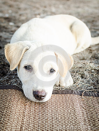 Free Cute Puppy Dog Sitting Looking Sad Stock Photography - 55637322