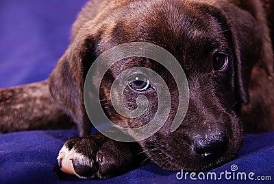 Cute Puppy - Missy 2