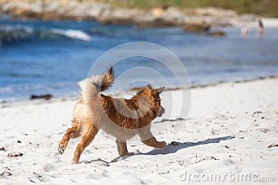 Cute puppy runs frolic along the beach