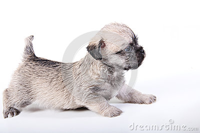 Cute puppy on white side