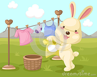 Cute rabbit dry washing
