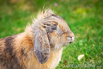 Cute rabbit portrait