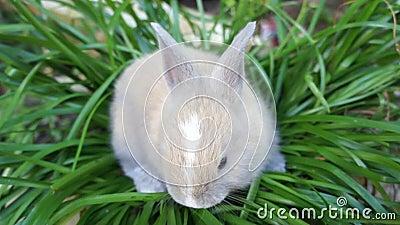 Cute rabbit stock video