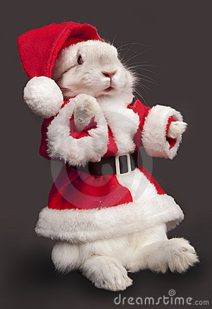 Cute rabbit in a santa costume