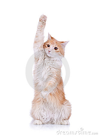 Free Cute Red And White Cat Waving Stock Image - 18992471