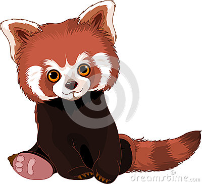 Cute Red Panda Royalty Free Stock Photography Image