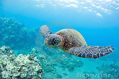 Cute sea turtle