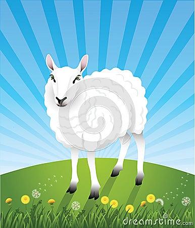 Cute_sheep