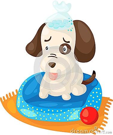 Cute sick dog