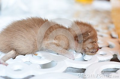 Cute sleeping kitten cat