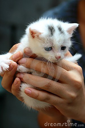 Cute small cat