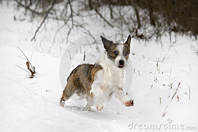 Cute small dog playing in snow