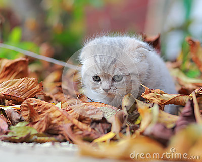Cute small kitten sitting on autumn