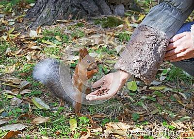 Cute small Squirrel