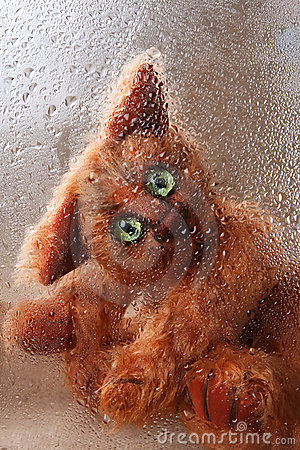 Cute soft toy Cat looking through rainy window