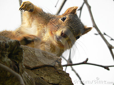 Cute Squirrel raising Arm