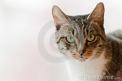 Cute Tabby Cat with Green Eyes