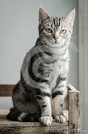 Free Cute Tabby Cat Sitting And Looking Royalty Free Stock Images - 46991919