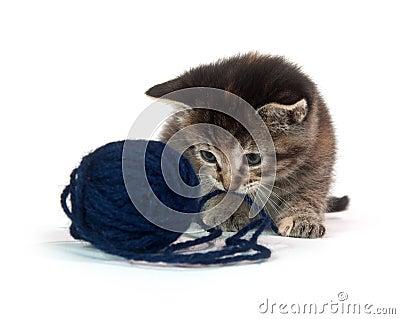Cute tabby kitten with blue yarn
