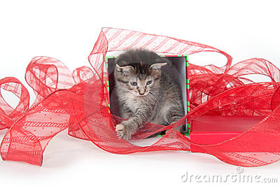 Cute tabby kitten in gift box