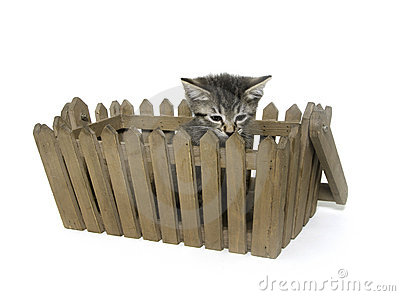 Cute tabby kitten ina  basket