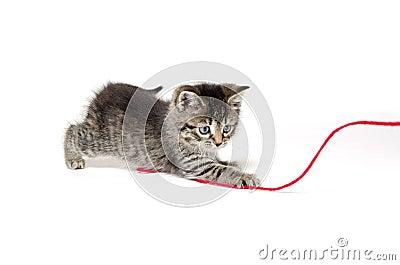 Cute tabby kitten with yarn