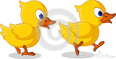 Cute two baby duck cartoon walking