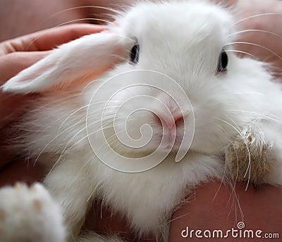Cute white bunny rabbit