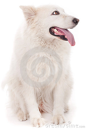 Cute white dog looking sideway