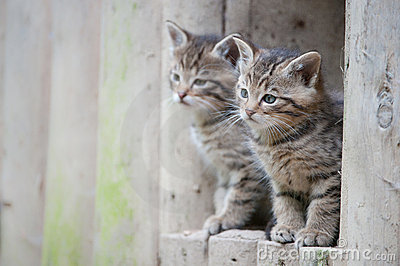 Cute Wildcat Babies Stock Images - Image: 14295254