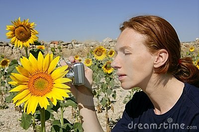 Cute woman photographer in nature sunflower field