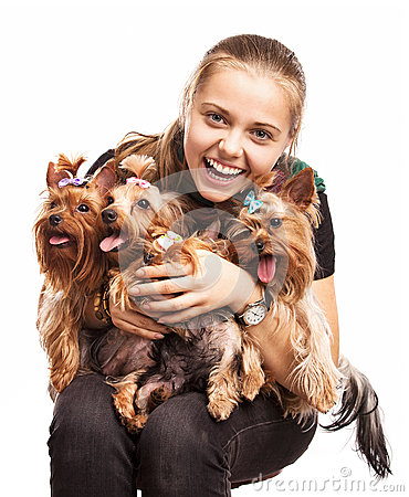 Cute young girl with Yorkshire terrier dogs