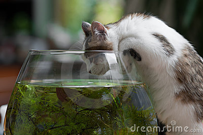 Cute young kitten and a fish bowl