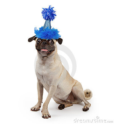 Free Cute Young Pug Dog Wearing A Party Hat Royalty Free Stock Photography - 20942297