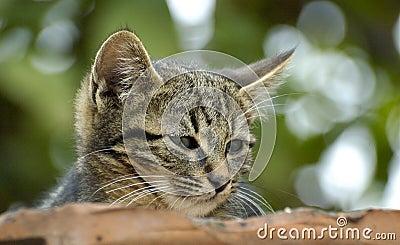 Cuten kitten
