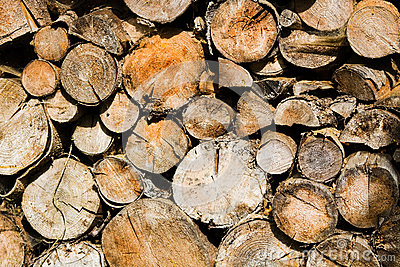 Cutted dried wood for the fire
