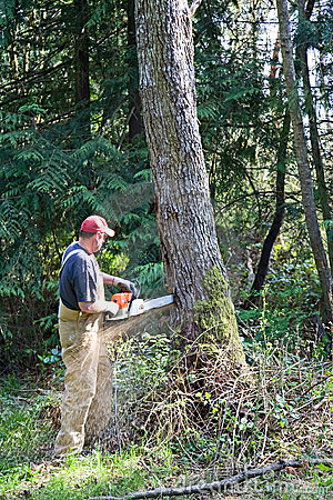 Free Cutting Down Large Tree Royalty Free Stock Photography - 9173897