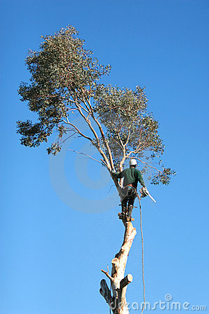 Free Cutting Down Trees Stock Photos - 2180213