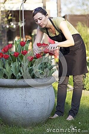 Cutting flowers