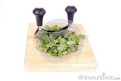 Fresh cilantro herbs