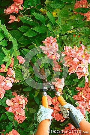 Cutting Hedges